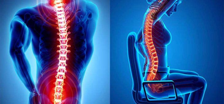 กระดูกสันหลังมีความสำคัญต่อมนุษย์อย่างไร